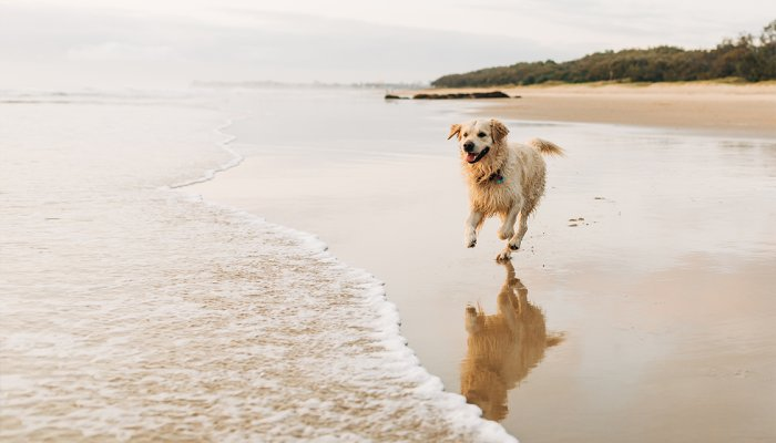 Thinking About Giving Your Dog CBD? Here's Everything You Need To Know