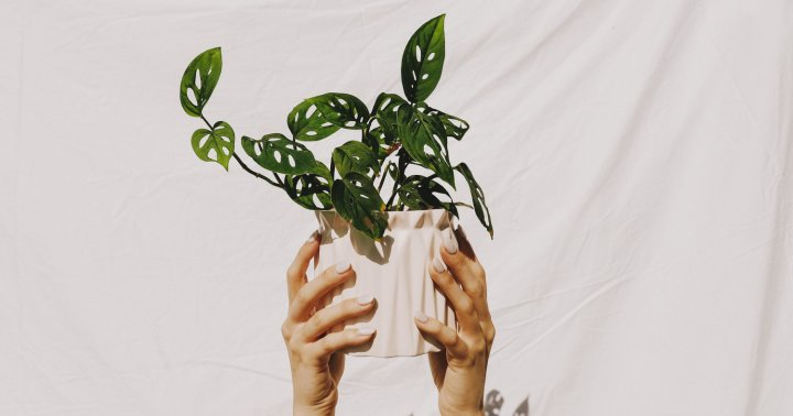 Why You Shouldn't Keep Your Houseplant In Its Plastic Pot For Too Long