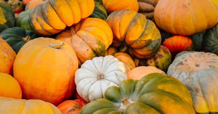 6 Healthy-ish Trader Joe's Treats: Fall-Flavor Edition (Yes, Pumpkin)
