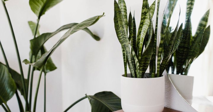 This Hybrid Plant Purifies The Air In Your Home By Imitating A Human Liver