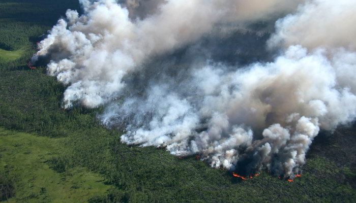 There's An Unexpected Side Effect Of Wildfires, According To A New Study