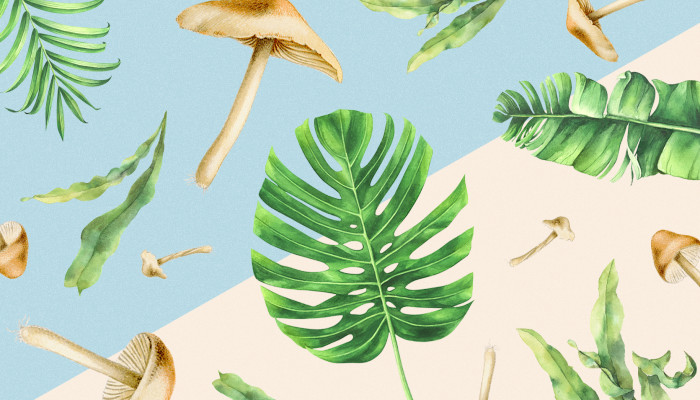 Mushrooms, Palm Leaves & Seaweed May Solve Our Plastic Packaging Problem