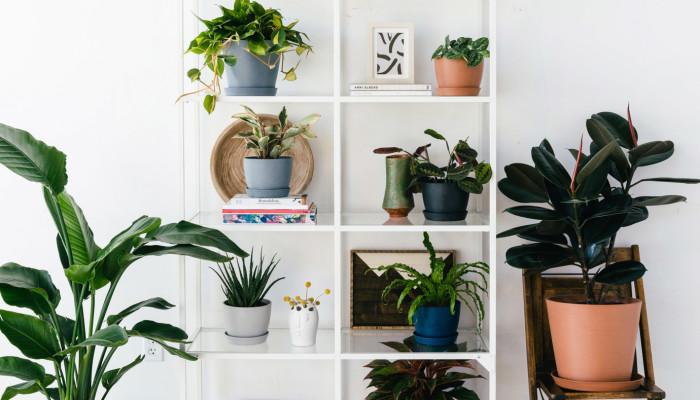 OK, So, What's The Hardest Houseplant To Kill?