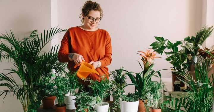 What Time Of Day Your Houseplants Should Be Watered & Why It Matters