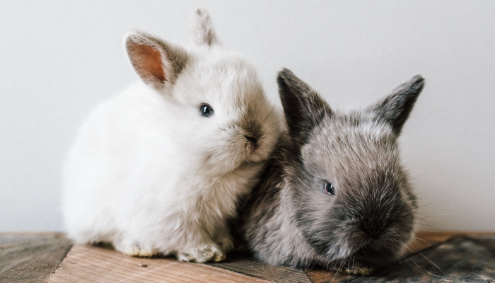 In The U.S., Animal Testing Could Be A Thing Of The Past By 2035