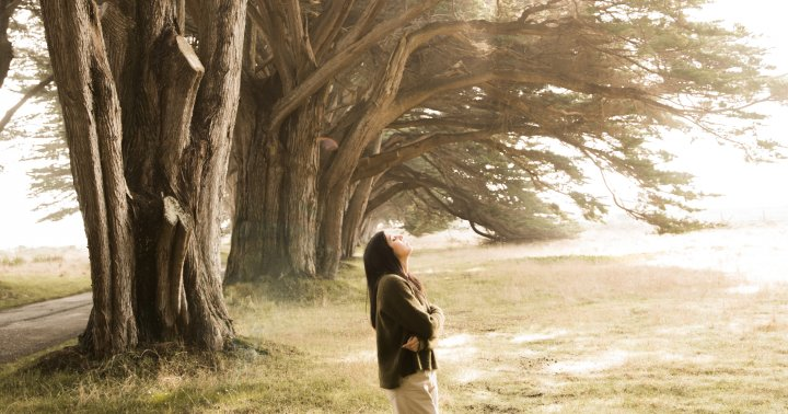 New Study Finds Link Between Tree Access & Antidepressant Use