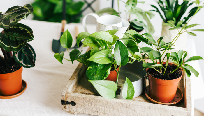 The Houseplant Mistake Everyone Makes When The Weather Gets Chilly