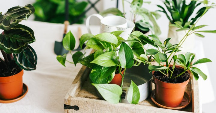 Bugs, Begone: A Super Easy Way To Get Pests Off Your Houseplants