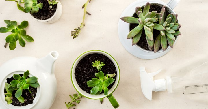The Secrets To Giving Your Succulents *Just* Enough Water Every Single Time