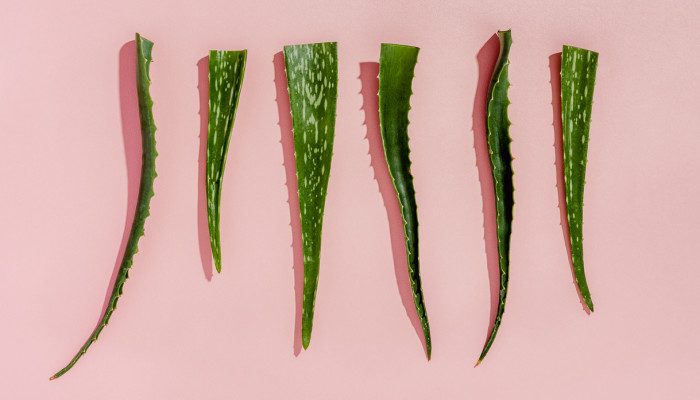 Can Aloe Vera Heal Acne Scars? Here's What The Research Says