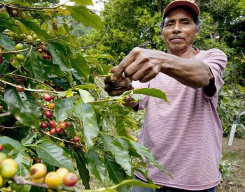 Coffee Could Become The World's Most Sustainable Crop