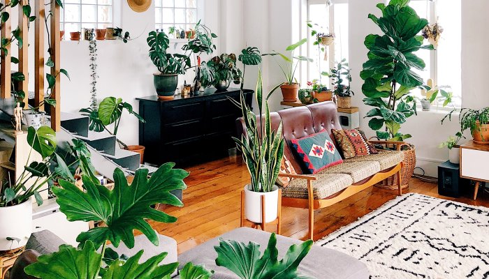 Just Another Reason To Get That Houseplant It Can Provide A Sense Of Control