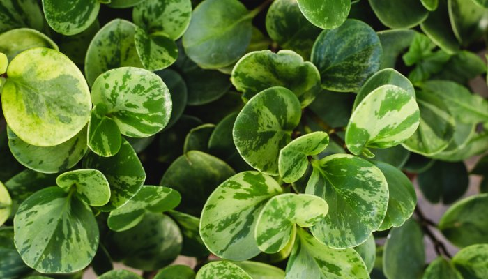 This Baby Houseplant Would Be A Darn Cute Addition To Any Collection – Carly Quellman, mindbodygreen