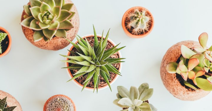 5 Must-Haves From Amazon's New Plant Shop