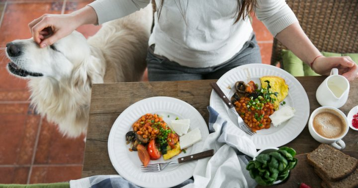 Bond With Your Dog With This Nutritious Make At Home Pup