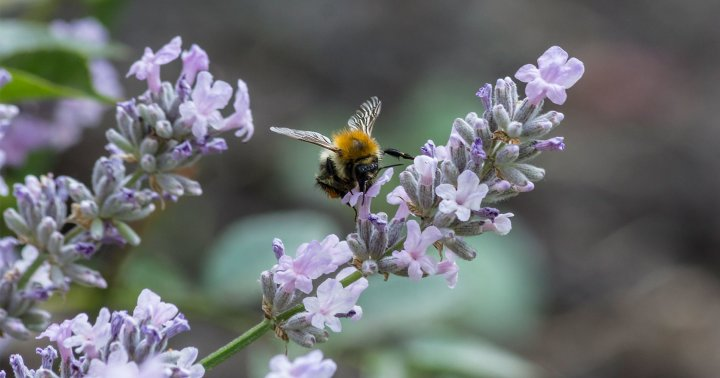 4 Essential Features Of A Pollinator-Friendly Garden