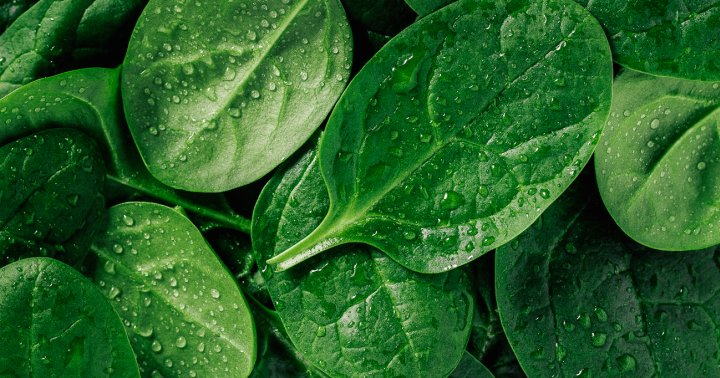 How To Best Store Spinach To Keep It Fresh, According To Chefs & Nutritionists