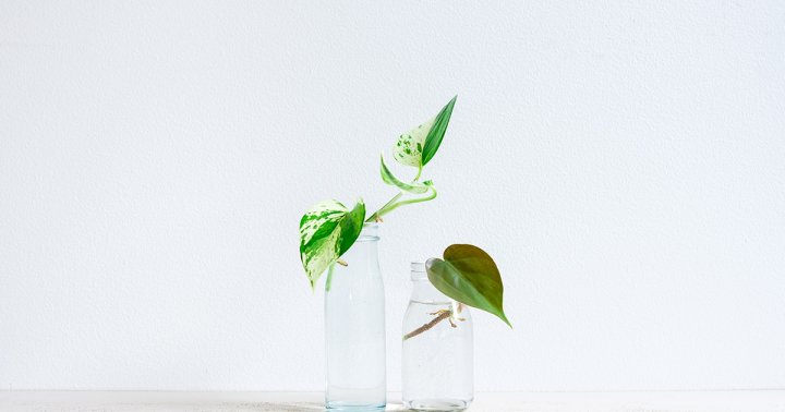 How To Become A Propagation Expert & Make Your Pothos Plants Multiply