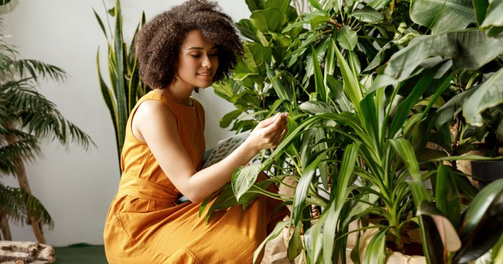 If Your Houseplant Has Sad & Droopy Leaves, This Could Be The Root Cause