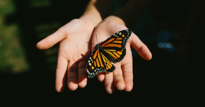 The Spiritual Symbolism Of The Butterfly & What To Do When You See One
