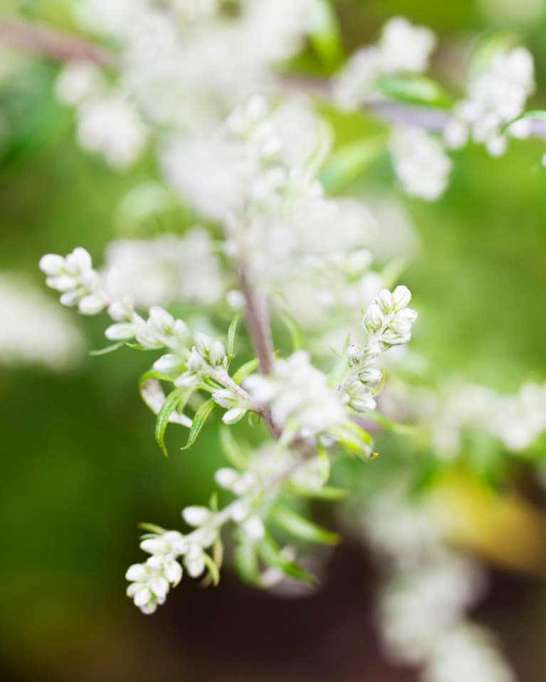 Mind-Altering Plants To Boost Your Mood