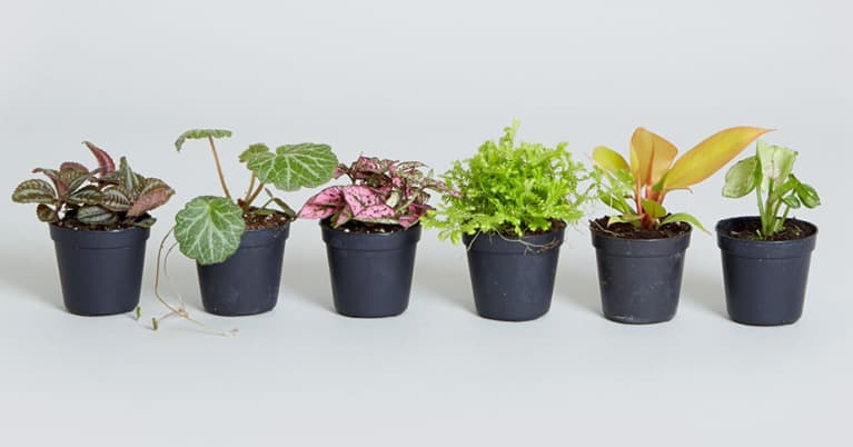 An Easy Diy Terrarium That Belongs In Your House