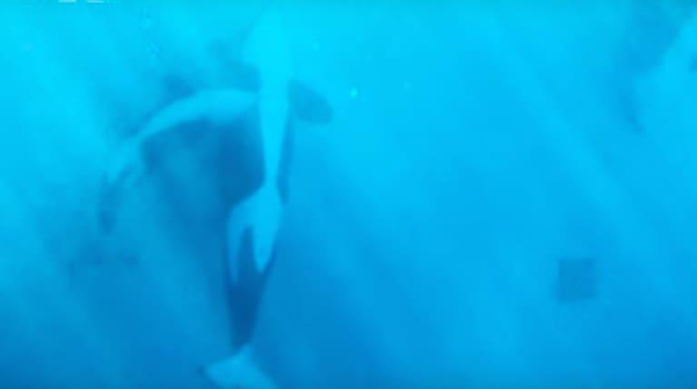 Seaworld Killer Whale Is -7606