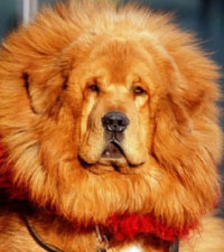 Dog Sold For  Million Dollars