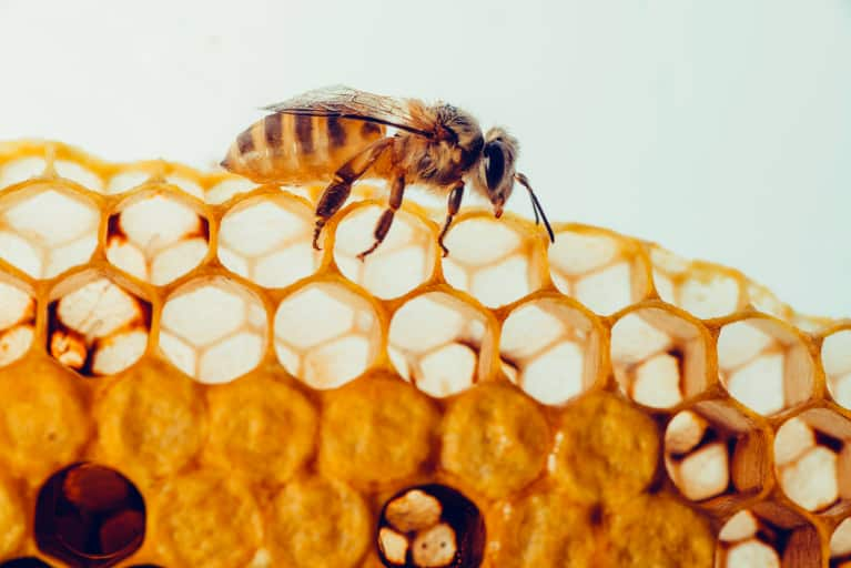 Propolis: How to Use Bee Propolis On Your Skin & What Are