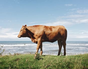 Is Grass-Fed Beef Really That Much Better?