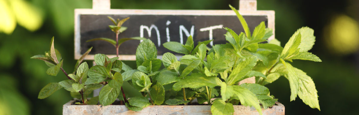 Soothe Your Skin With This DIY Garden Mint Astringent Hero Image