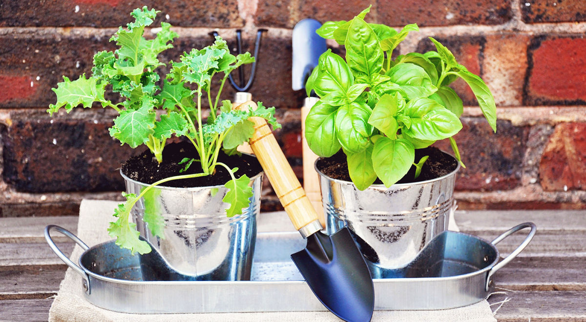 How To Make A Container Garden + 6 Easy-To-Grow Plants To Include Hero Image