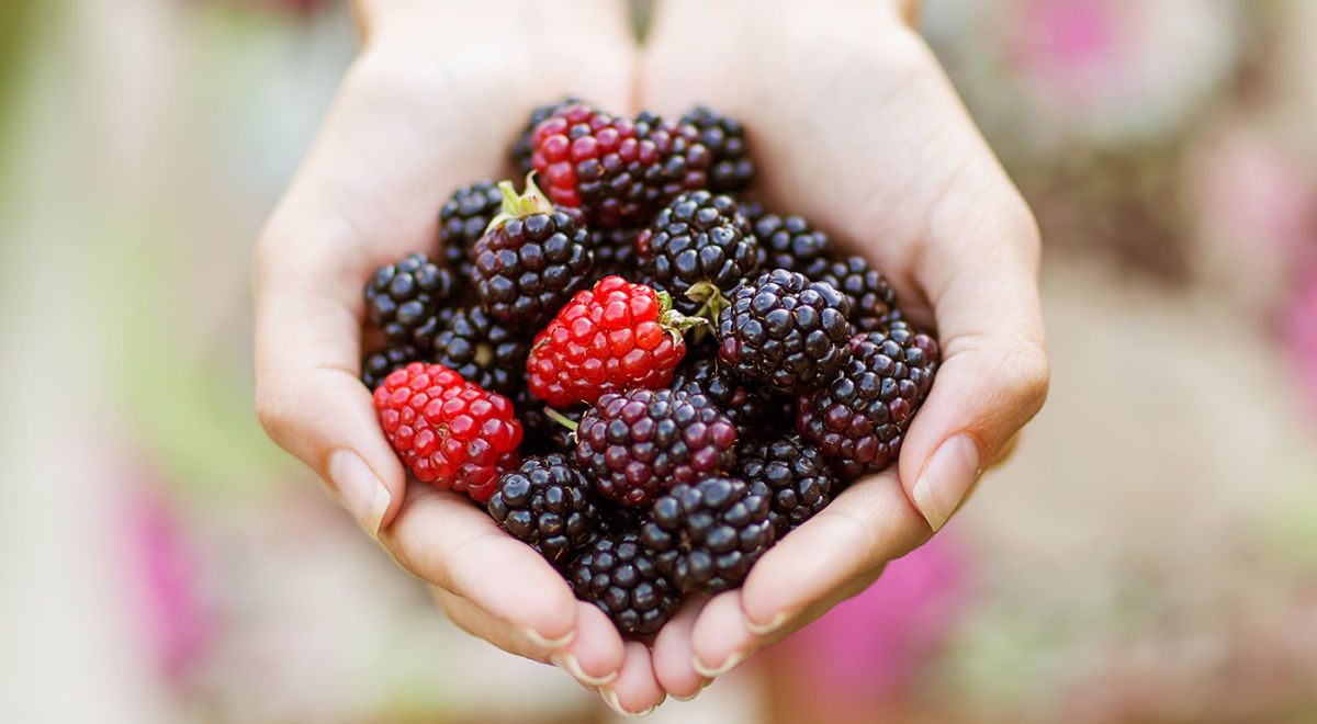 21 Flavonoid-Rich Foods To Help Anxiety Hero Image