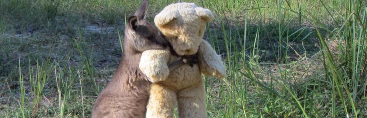 A Wallaby Adopted A Teddy Bear (And Other News Stories That Will Restore Your Faith In The World) Hero Image