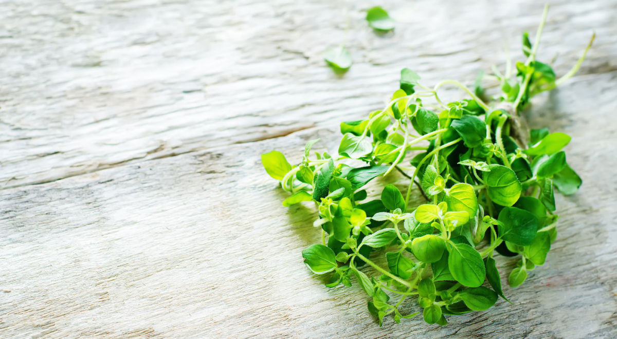 Give Your Immune System A Boost With These 3 Herbs & Spices Hero Image