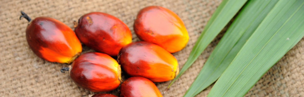 Is Palm Oil Really That Bad? Yes! Here's What You Can Do About It Hero Image