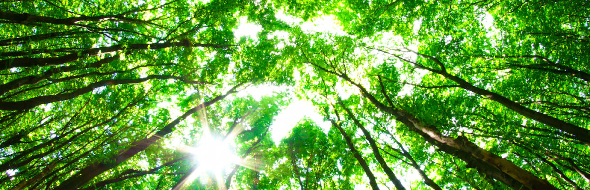 Why You Need To Try Japanese Forest Bathing Hero Image