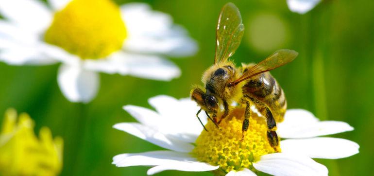 Are Big Macs Killing The Bees? Hero Image