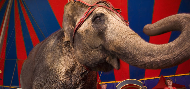 Ringling Bros. Is Finally Getting Rid Of Its Elephant Act Hero Image