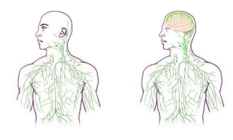 Scientists Discover A Connection In The Body We Never Knew Existed Hero Image