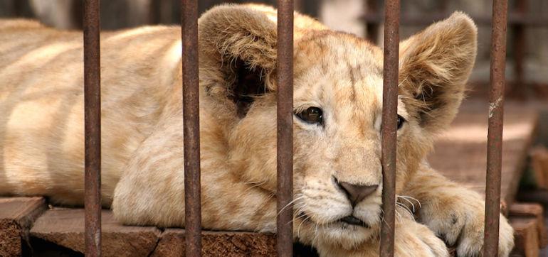 San Francisco Wants To Ban Wild Animal Performances Hero Image