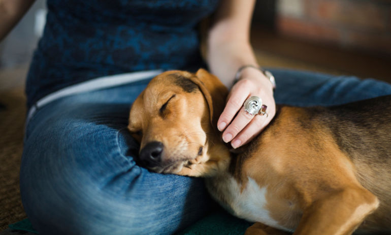 10 Steps To Protect Your Pets (And Your Home!) From Toxins Hero Image