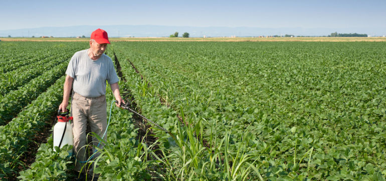 """""""Extreme Levels"""" Of Herbicide Roundup Found In Food Hero Image"""