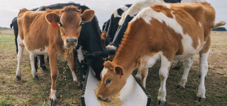 FDA Says Dairy Farmers Are Sneaking Antibiotics To Their Cows Hero Image