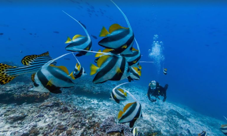 Google Features Stunning Underwater Photos For World Oceans Day Hero Image