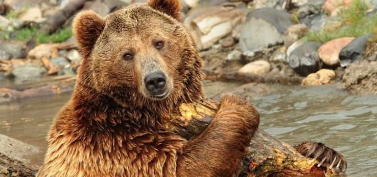 I Was Chased By A Grizzly Bear. Here's What I Learned. Hero Image