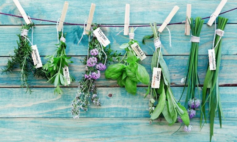 5 Herbs You Can Grow Right In Your Kitchen Hero Image