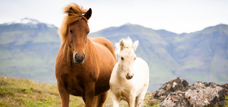 5 Things Horses Taught Me About Life Hero Image