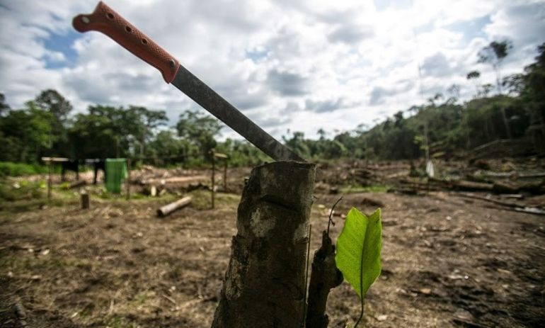 The Best Way To Stop Amazon Rain Forest Destruction Hero Image