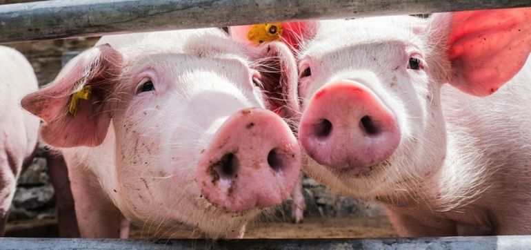 Why The FDA's New Rules On Antibiotics For Livestock Aren't Enough Hero Image